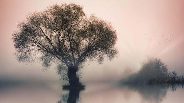 Groene boom op waterlichaam Gratis Foto