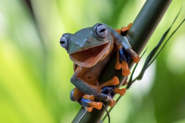 Groene boomkikker die op de bamboeboom hangt Premium Foto