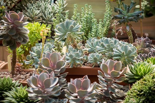 Groene cactussen en vetplanten selectieve aandacht close-up Premium Foto