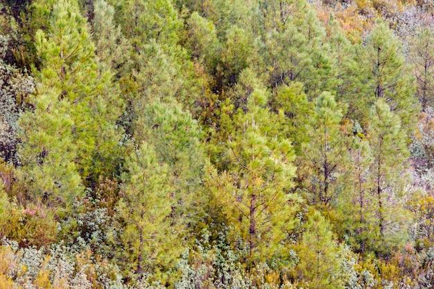 Groene en kostbare bomen in een prachtig bos Premium Foto