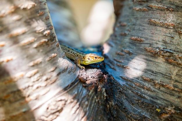 Groene gevlekte hagedis op een boomtak. Premium Foto