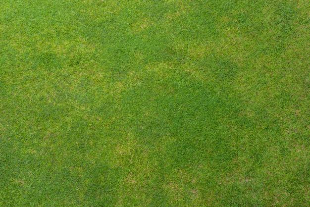 Groene grastextuur als achtergrond Premium Foto