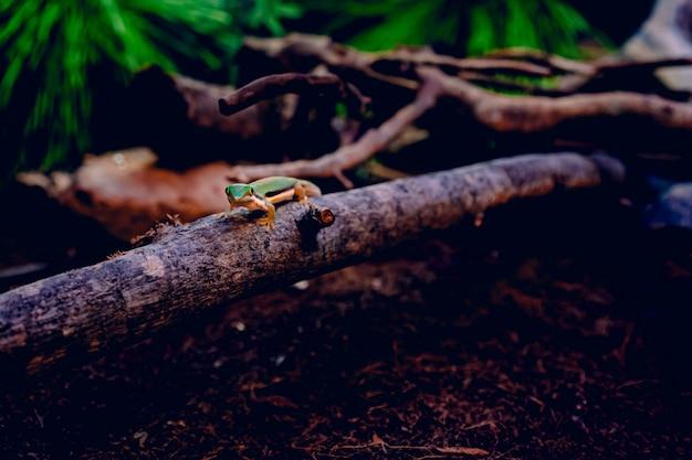 Groene hagedis die op een stuk hout over bruine droge bladeren loopt die door boomtakken worden omringd Gratis Foto
