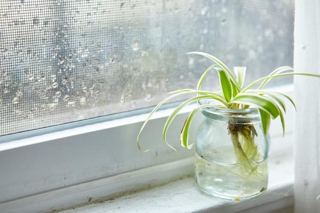 Groene kamerplant in een glazen pot op een vensterbank op een regenachtige dag Gratis Foto