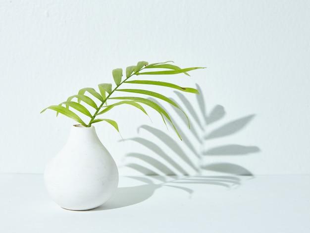 Groene kamerplant in een witte keramische vaas waarvan de schaduw op een wit oppervlak valt Gratis Foto