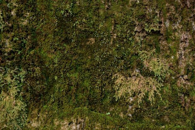 Groene mostextuur in aard groen mos op steenachtergrond. Premium Foto