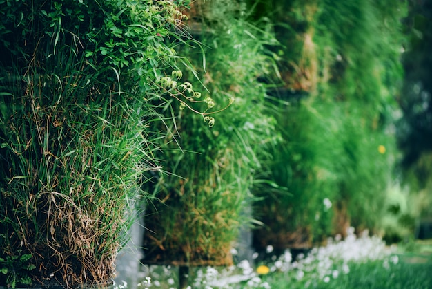 Groene muur. eco-vriendelijk verticaal tuinconcept. natuur, zomer, lente en tuin concept Premium Foto