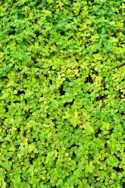 Groene muur Premium Foto