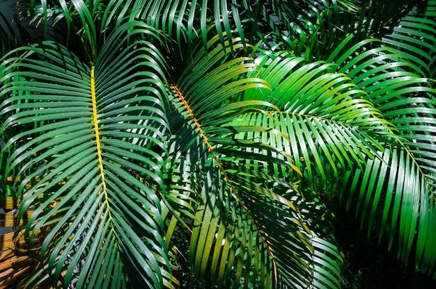 Groene palmbladen in de tuin Premium Foto