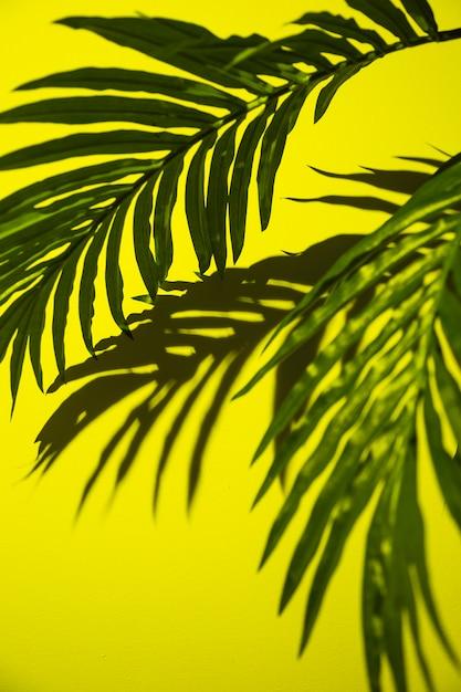 Groene palmbladen op gele achtergrond Gratis Foto
