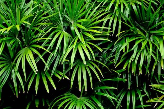 Groene palmbladenpatronen in regenwoud - licht en schaduw Premium Foto