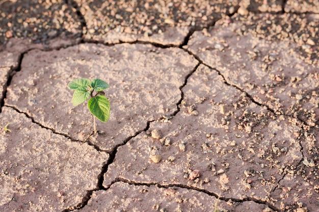 Groene plant groeit uit scheuren in de aarde Premium Foto
