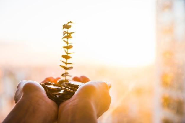 Groene plant groeit van munten Gratis Foto