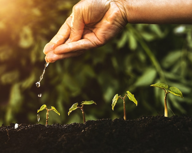 Groene planten in groeiende vormen met de hand water geven, concept voor groeiend succes, ecologie en de aarde redden. Premium Foto
