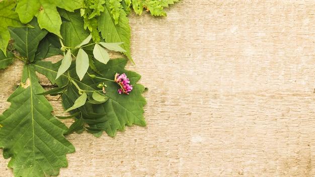 Groene samenstelling met bladeren op hout Gratis Foto
