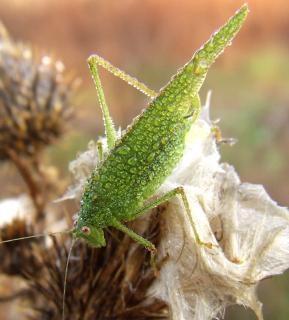 Groene sprinkhaan veld foto gratis download groene sprinkhaan veld gratis foto altavistaventures Image collections