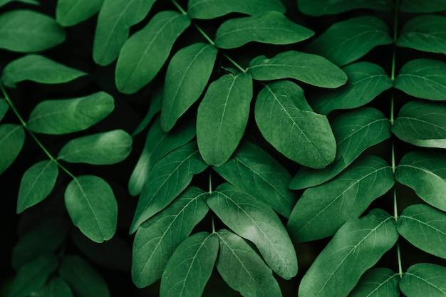 Groene tropische bladeren Gratis Foto