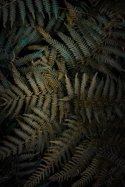 Groene varenbladeren geweven in de tuin in de aard Premium Foto