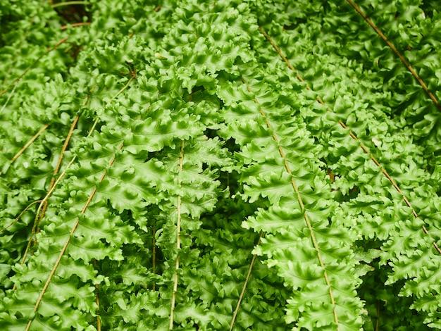 Groene varenbladeren in de openluchttuin Premium Foto