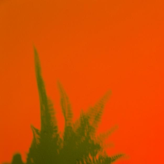 Groene varenbladeren op een oranje achtergrond Gratis Foto
