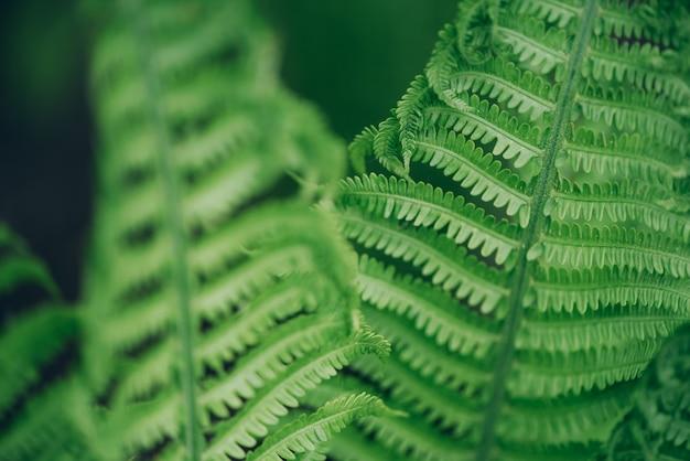 Groene varens bladeren. natuurlijk gebladerte aardconcept. Premium Foto