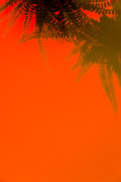 Groene varenschaduw op een oranje achtergrond met ruimte voor het schrijven van de tekst Gratis Foto