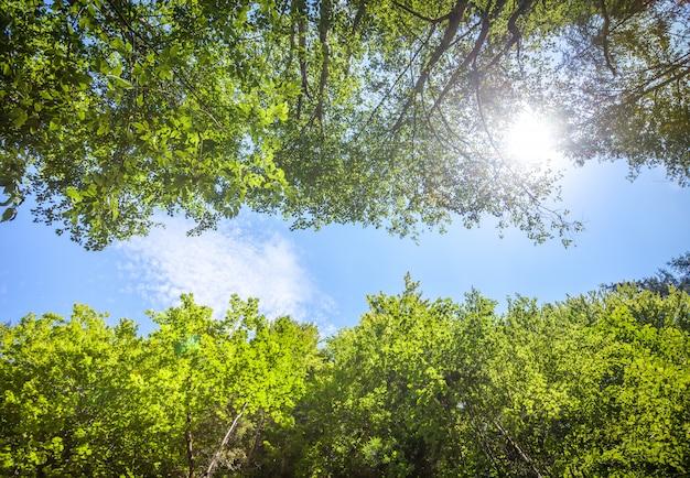 Groene verse boombladeren tegen de blauwe hemel Premium Foto