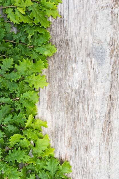 Groene verse eikelbladeren op houten lijst Gratis Foto