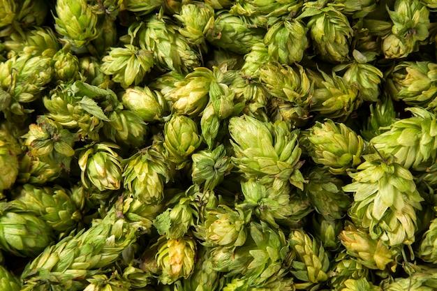 Groene verse hopbellen voor het maken van bier en brood close-up Premium Foto