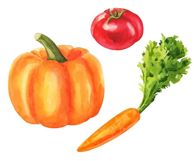 Groenten. aquarel groentewinkel set. verse vegetarische voedselillustratie. Premium Foto