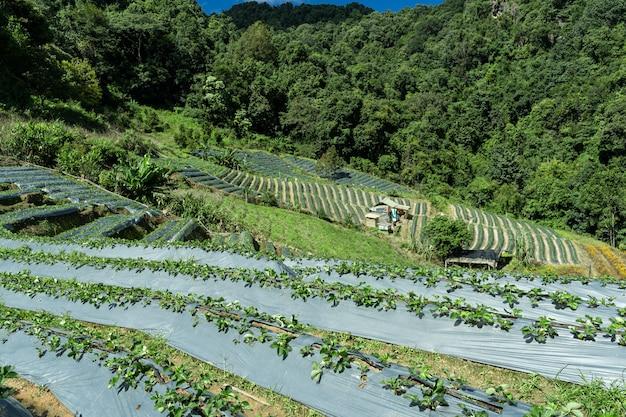 Groenteplantages midden in het bos Gratis Foto