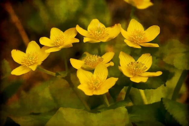 Groep gele winterakoniet bloemen Gratis Foto