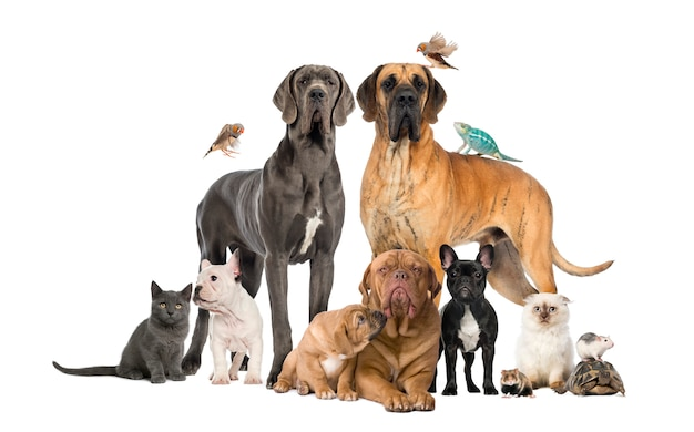 Groep huisdieren - hond, kat, vogel, reptiel, konijn, geïsoleerd op whi Premium Foto