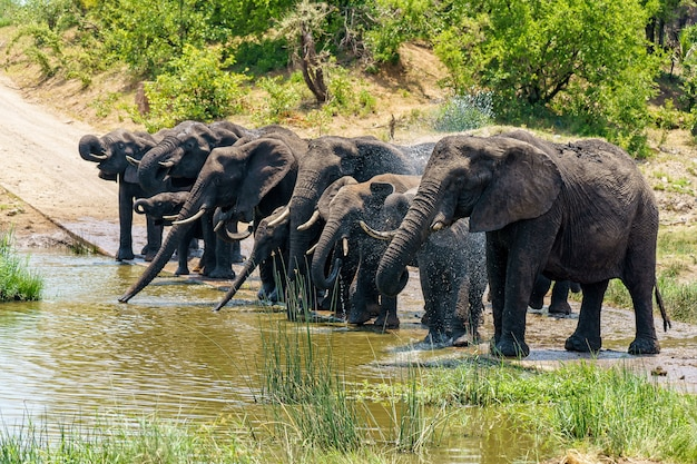 Groep olifanten drinkwater op een overstroomde grond overdag Gratis Foto
