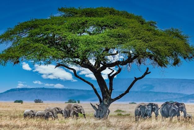 Groep olifanten onder de grote groene boom in de wildernis Gratis Foto