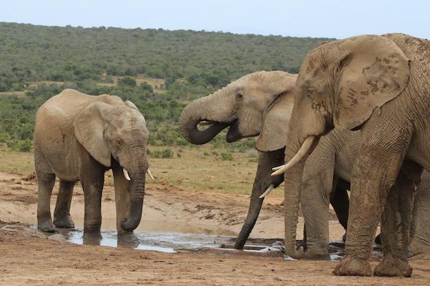 Groep olifanten spelen rond een meertje in het midden van een jungle Gratis Foto