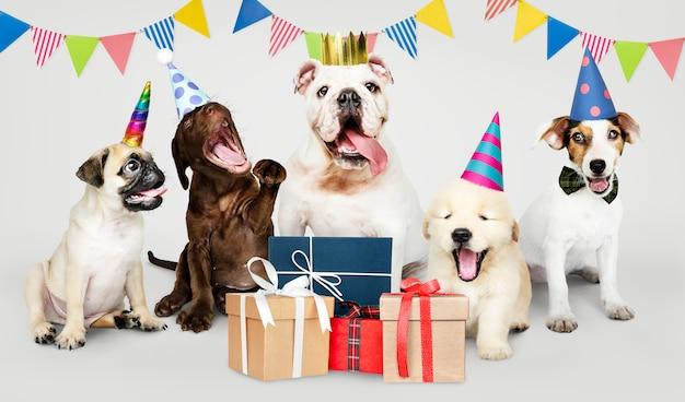 Groep puppy die een nieuw jaar viert Gratis Foto