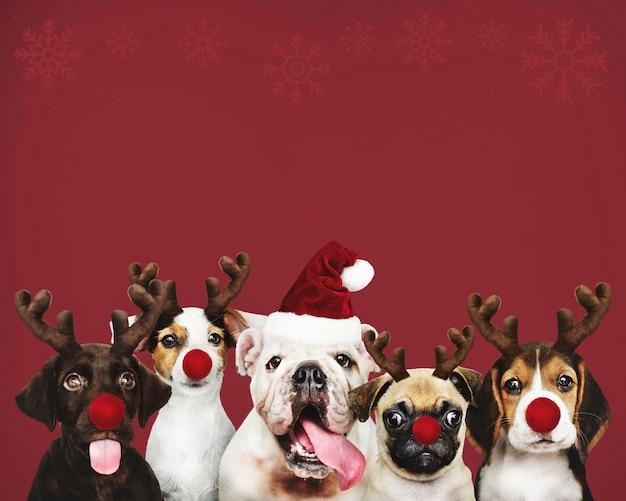 Groep puppy die kerstmiskostuums draagt Gratis Foto