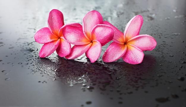 Groep roze frangipani natte zwarte achtergrond neerzetten Premium Foto