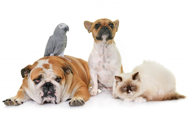 Groep van huisdieren Premium Foto
