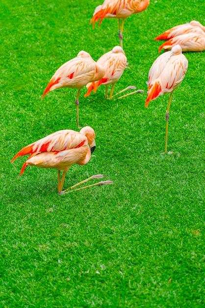 Groep van prachtige flamingo's op het gras in het park Gratis Foto