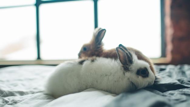 Groep van schoonheid schattige zoete little easter bunny konijnen baby in verschillende kleuren zwart bruin en wit in de kamer op het bed Premium Foto
