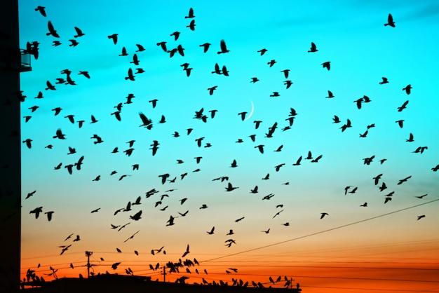 Groepen vogels die boven dak bij zonsondergang op maanachtergrond vliegen. Premium Foto