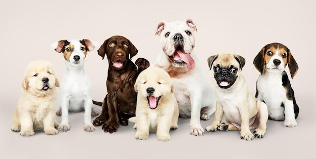 Groepsportret van schattige puppy's Gratis Foto