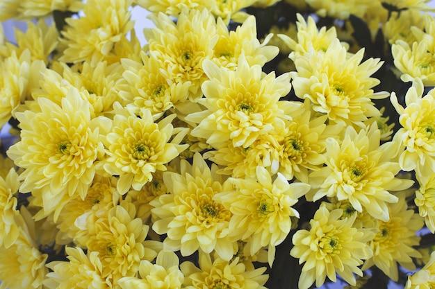 Groot boeket van gele chrysanten bovenaanzicht. mooie bloemenachtergrond Premium Foto