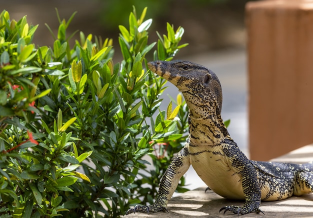 Groot reptiel dichtbij plant close-up Gratis Foto