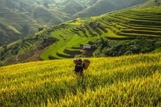 Grootmoeders en kleinkinderen reizen om in het oogstseizoen rijst te oogsten. Premium Foto