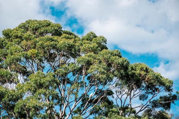 Grote boom en blauwe lucht Gratis Foto