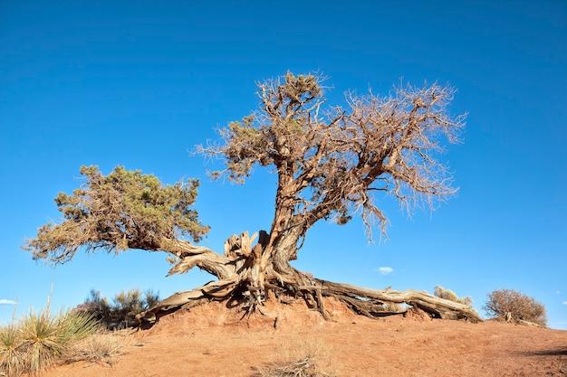 Grote boomwortel in blauwe hemel Premium Foto
