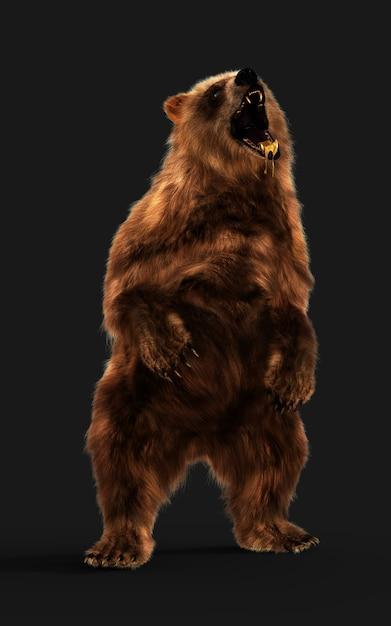 Grote bruine beer houding geïsoleerd op donkere achtergrond met uitknippad. Premium Foto